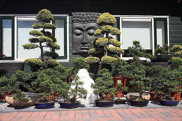 Bomen- en plantenverzorgingskalender - Kiëta Koi Veendam